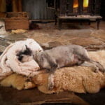 a gray small dog laying on a cozy rug with a blanket as a pillow in front of the fireplace