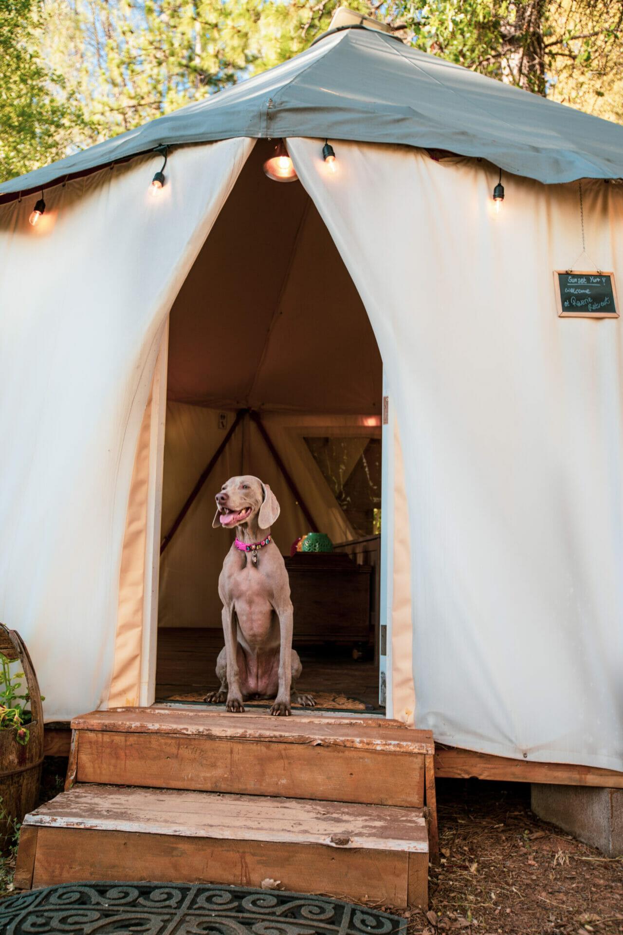 Pet friendly Sunset Yurt