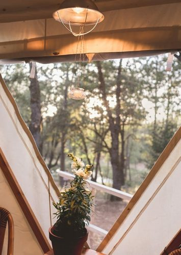 a green small plant in front of the view of yurt ponderosa